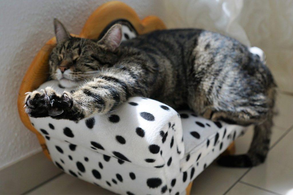 cat stress free